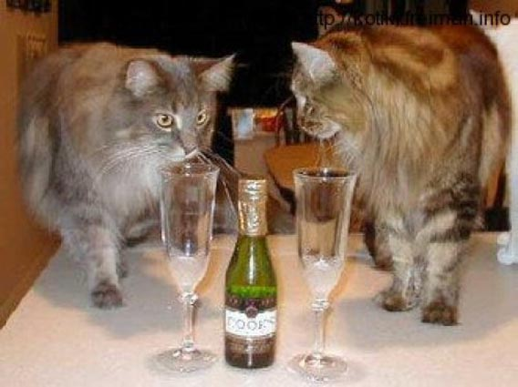 Немного юмора в 4 строчках ( коты и кошки. стихи Лоры. ответить10. на...